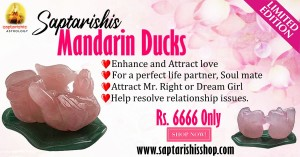 Mandarin Ducks ( For love & Relationship)